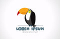 Logo Toucan. Bird is sitting on the rope. Vector i