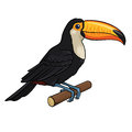 Toucan vector illustration of a isolated on a white background Royalty Free Stock Photography