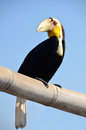 Toucan with white beak resting on a bamboo pole over blue sky Stock Image