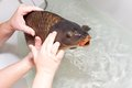 Touch hands and carp Royalty Free Stock Photo
