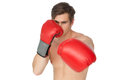 Tough man wearing red boxing gloves punching to camera on white background Royalty Free Stock Images