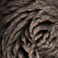 Toulouse goose feathers Stock Photo