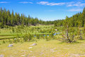 Toulumne meadows yosemite national park california Royalty Free Stock Photography