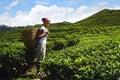 Turista na čaj plantáž