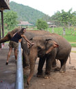 Tourist with elephant in kanchaburi thailand Royalty Free Stock Photography
