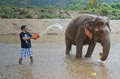 Tourist with an elephant washing in thailand Royalty Free Stock Photography