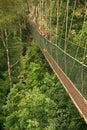 Tourist standing on canopy walkway taman negara national park malaysia Stock Photography