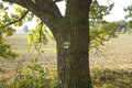 Touristic mark on tree trunk Stock Image