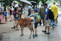Tourists enjoy the cookies with deer on sideway. Royalty Free Stock Photo