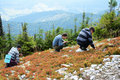image photo : Tourists picking berries in the slope.