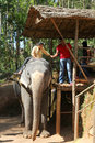Tourists ride on elephants in the jungle Royalty Free Stock Images