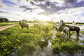 Tourists ride horses in the Pantanal. The Pantanal is the world's largest tropical wetland areas located in Brazil , South America Royalty Free Stock Photo