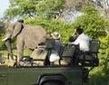 Tourists On Safari Watching El...