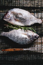 Tow raw dorado fish with rosemary on grill top view and sea salt over old wooden table Royalty Free Stock Image