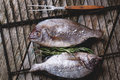 Tow raw fish with rosemary on grill top view bream and sea salt over old wooden table Stock Image