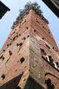 The tower of guinigi at lucca on italy Stock Photo