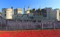 Tower of london towering over rememberance poppies ceramic remembrance day Stock Images