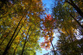 Towering autumn trees the view of multicolored from the floor of a forest at tinker falls in syracuse new york Royalty Free Stock Photography
