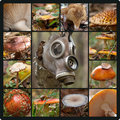 Toxic forest composition with mushrooms and gas mask Stock Photos