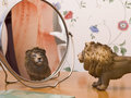 Toy animal lion in a child s imagination a looks in the mirror Royalty Free Stock Photos