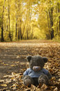 Toy Bear in the autumn Stock Photos