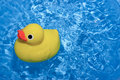 Toy ducky in water Royalty Free Stock Image