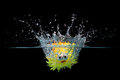 Toy fish splash into water spikey dropped on black background Stock Images