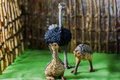 Toy ostriches Royalty Free Stock Photo