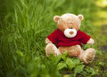 Toy Teddy bear sitting in the grass Royalty Free Stock Photo