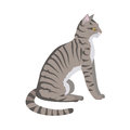 Toyger Cat Vector Flat Design Illustration