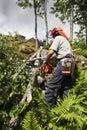Trabajos del leñador y del bosque Imagen de archivo libre de regalías
