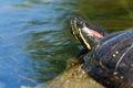 Trachemys scripta elegans detail of the head turtles Stock Photo