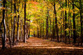 Track through autumn forest Royalty Free Stock Photography