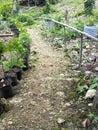 Track on farm land in Balamban, Cebu, Philippines Royalty Free Stock Photo