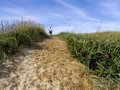 Track over grassy sand dune Royalty Free Stock Photo