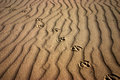 Track in sand Royalty Free Stock Photography