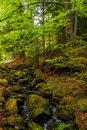 Track in a wilde forest mountain stream the carpathian mountains Stock Photo