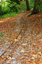 Track in the woods rusted miniature rail through wooded area Stock Image