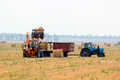 Tractor loads bays of hay on the harvested field Royalty Free Stock Image