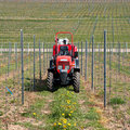 Tractor in the vineyard Royalty Free Stock Photos