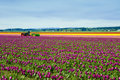 Tractors in the Tulips Royalty Free Stock Photo