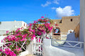 The traditional architecture of santorini oia white and blue houses and yards pink flowers Royalty Free Stock Photos