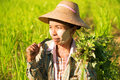 Traditional asian female farmer working in corn field Royalty Free Stock Photo