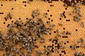Close up of a bee hive. Royalty Free Stock Photo