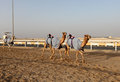 Traditional camel race in Doha Stock Photos