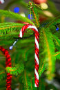 Traditional candy cane on christmas tree hanging Stock Images