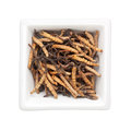 Traditional Chinese Medicine - Ophiocordyceps sinensis (caterpil Royalty Free Stock Photo