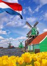 Traditional Dutch windmills with tulips in Zaanse Schans, Amsterdam area, Holland Royalty Free Stock Photo