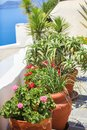 Traditional flowers in pots on the Greek streets Royalty Free Stock Photo