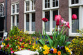 Traditional house with tulip garden in amsterdam Royalty Free Stock Photo